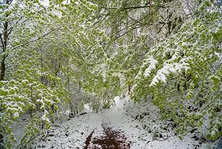 Wintereinbruch in der Hocheifel an der Hohen Acht