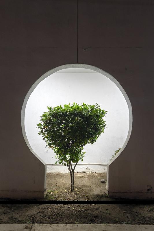 Keyhole Bush