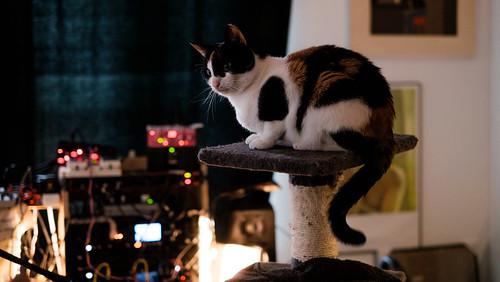 dj cat stevens ii