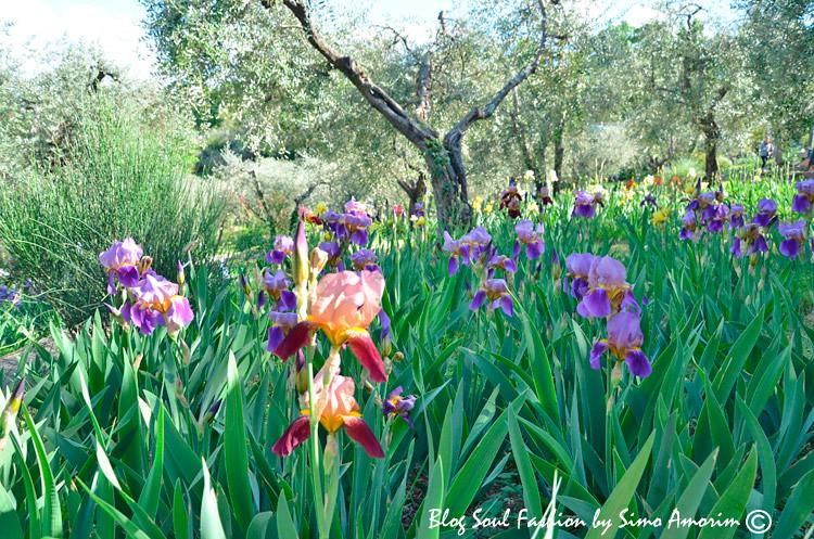 Muitas flores ainda irão abrir e já quero voltar novamente para ver o jardim todo colorido! Da estação de trem até o jardim tem as linhas de onibus 12 e 13