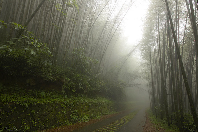 The Foggy Bamboo Path