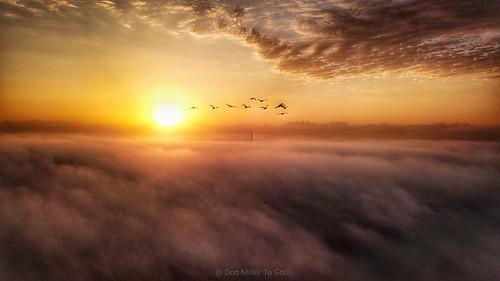 djimavicpro dronephotography sunrise foggy birdsinflight