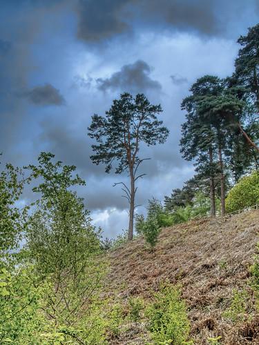 uk england bedfordshire sandy rspb landscape sky heath heathland trees natural nature spring clouds colour color