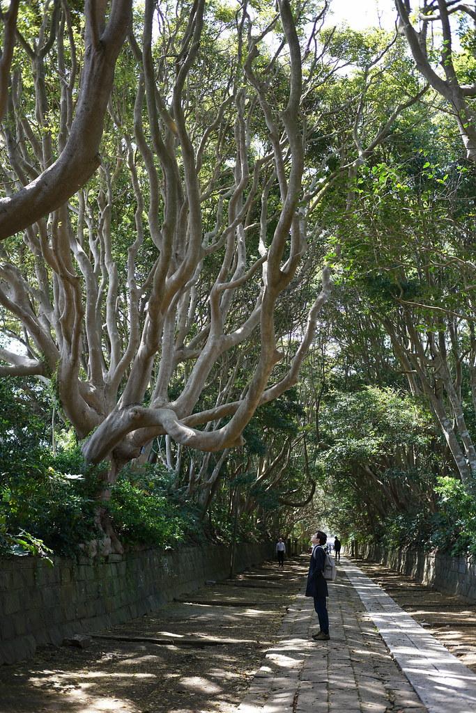 酒列磯前神社の樹叢(_2