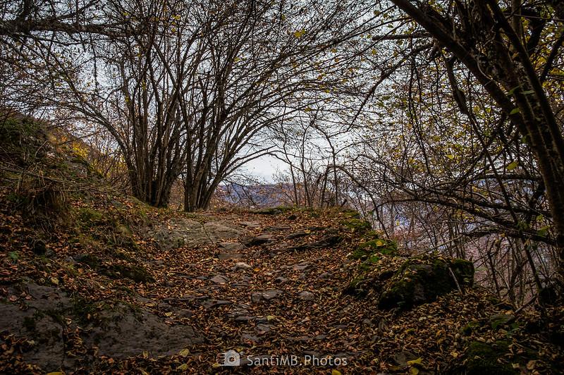 Parte alta del Bosc de Carlac