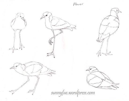 wk5 bird homework (proportions)