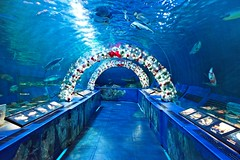 Shinagawa Aquarium illuminated tunnel
