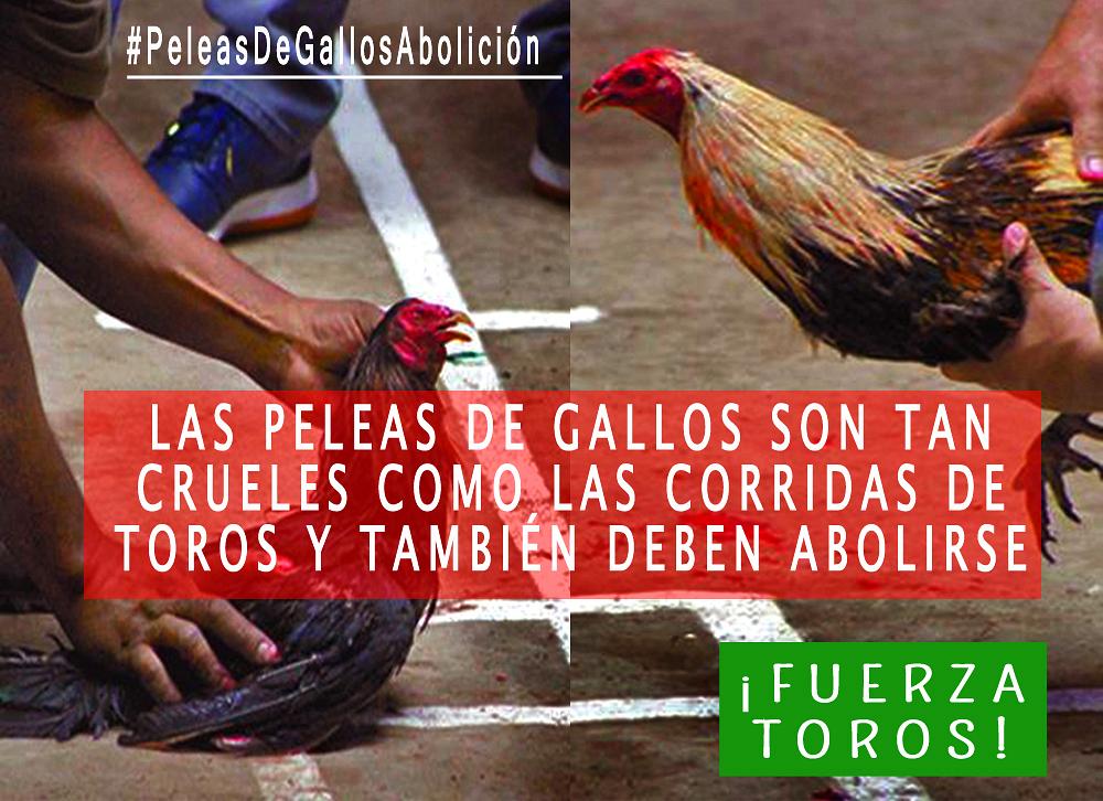 Las Peleas de Gallos son tan crueles como las corridas de toros y deben abolirse también