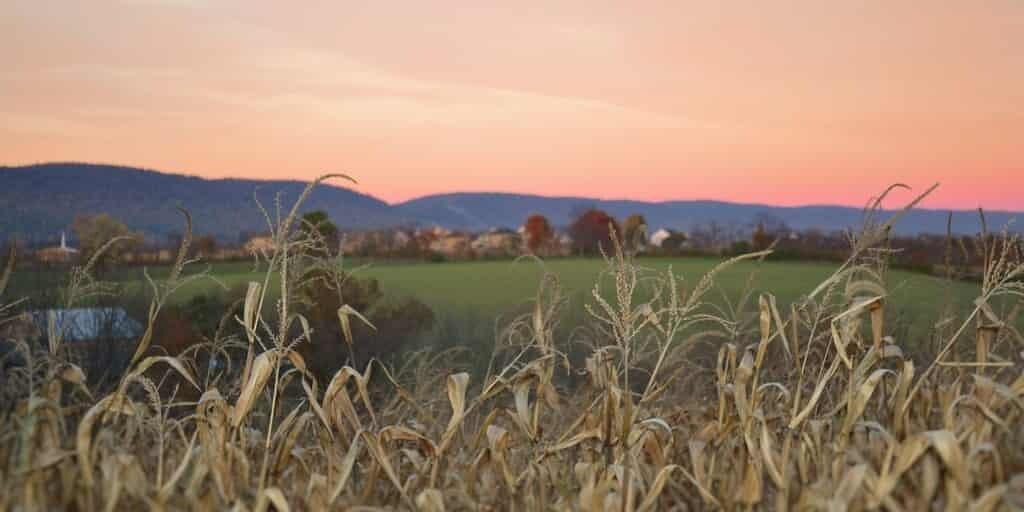 toxine-pesticide-contre-cancer