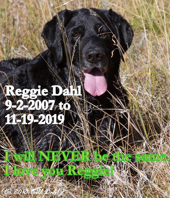 Reggie Dahl