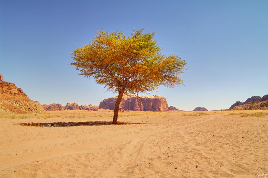 L'âme du désert  47745348861_6a7c92b85e_o