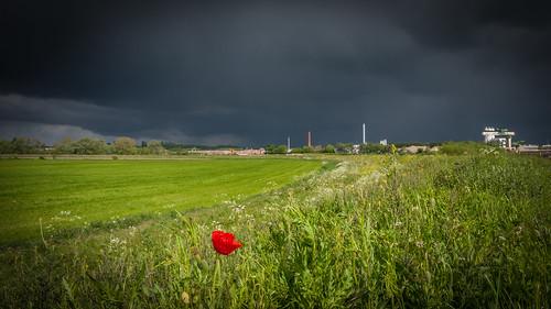 poppy heindonk belgium storm dark clouds rain red