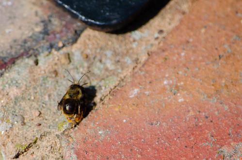 Mortal combat: bee style
