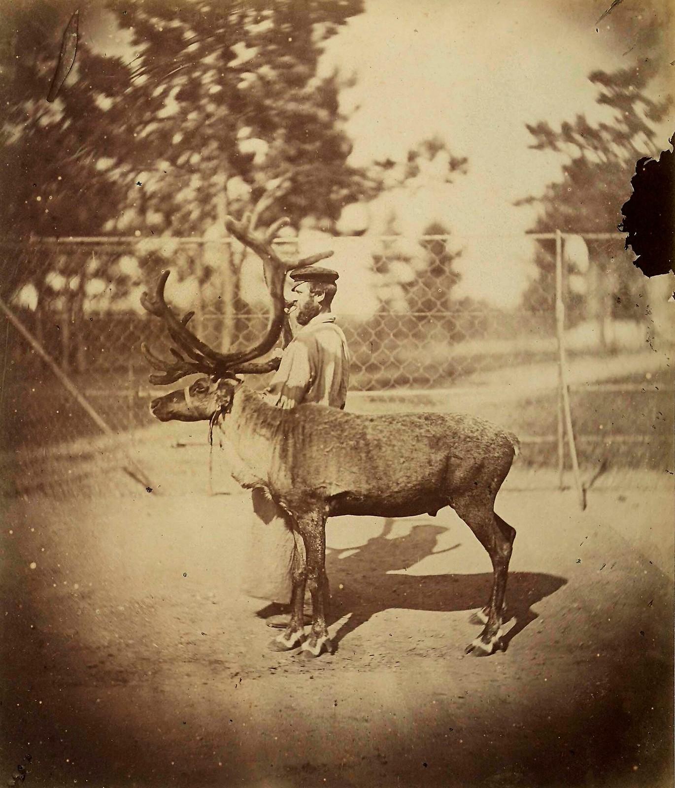 1870. Булонский лес. Олень в зоологическом саду