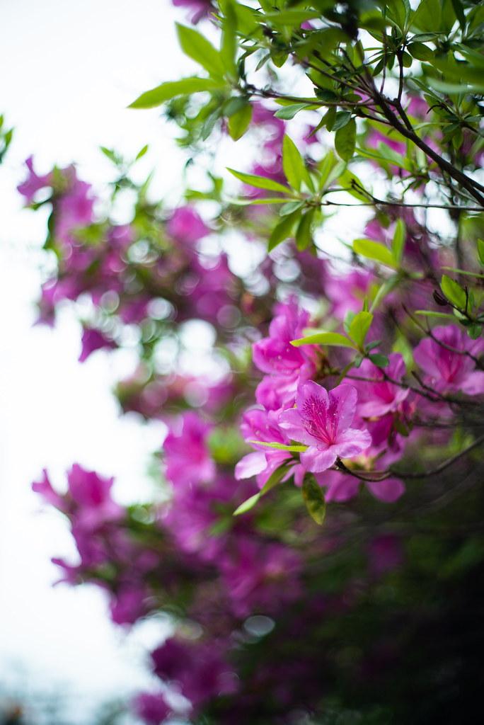 Flowers_07