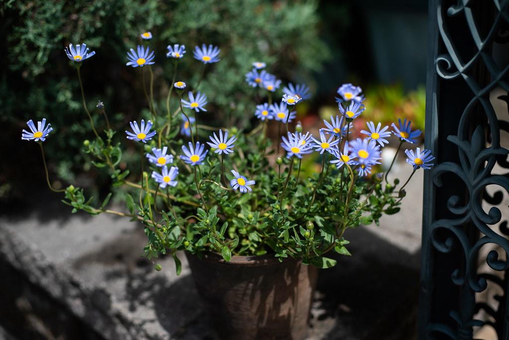 Flowers_05
