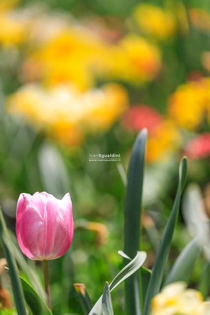 Turri_giardino_fiorito_190028