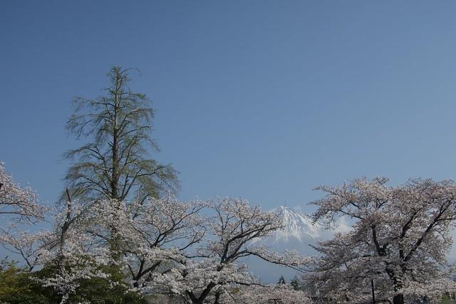 fujisanhonguusengentaisha_017