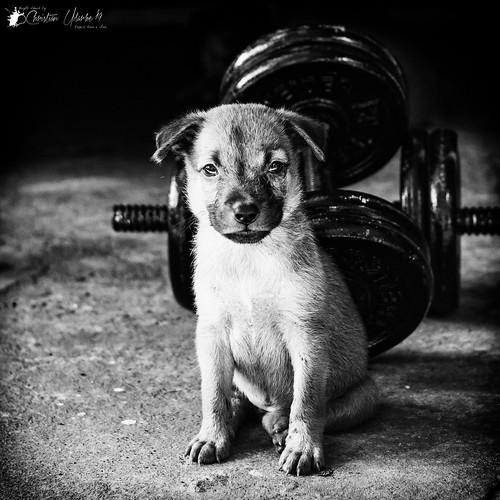 adobelightroomclassiccc animal bw blackandwhite cc creativecloud dog flickr fun google monochrome monotone niksoftware nikond7200 nikonmbd15 pet puppy sigma30mmf14exdchsm silverefexpro2 street