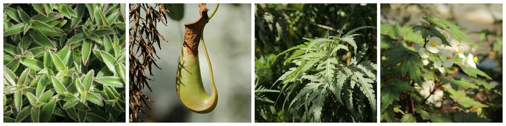Botanical Garden, Helsinki