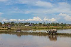 Kampot_8538