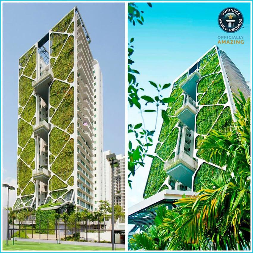 Xu hướng xây dựng những bức tường xanh ngày càng trở nên phổ biến ở Singapore - quốc gia thịnh vượng bậc nhất Châu Á.