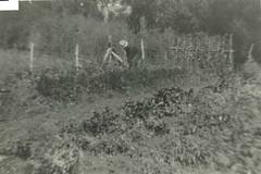 Mounted Constale Wegener tending his garden at Willunga Police Station, 1920s