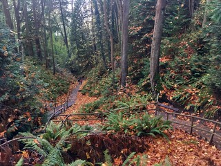 Rainforest Canyon in Pacific Spirit Park