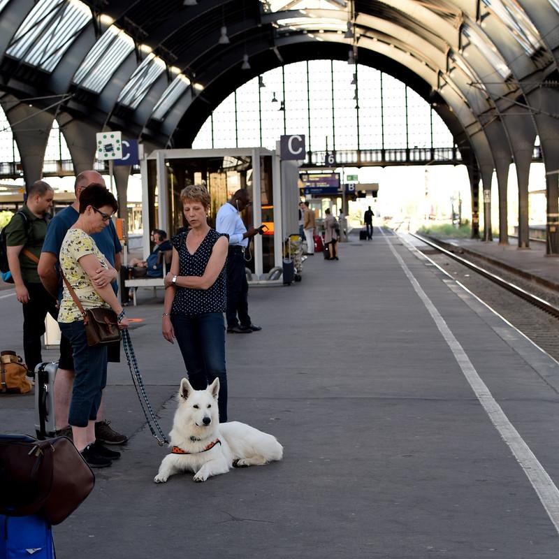 Hund på tågstation