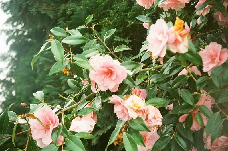 Spring Bloom I