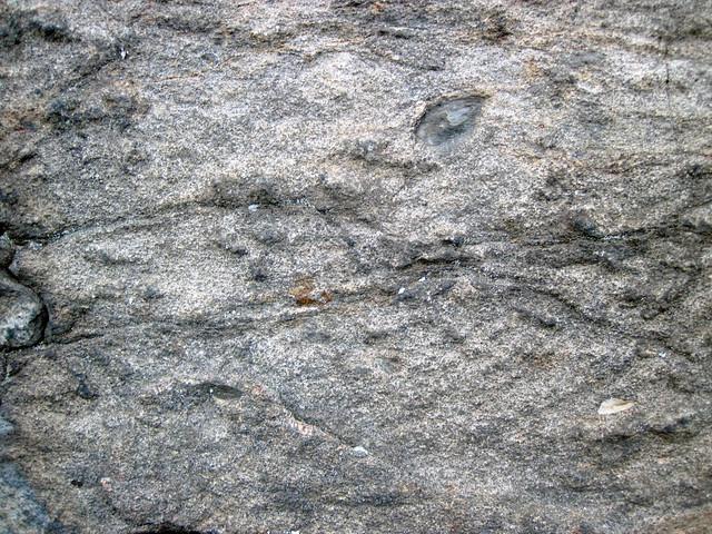Metagraywackes (Chelmsford Formation, Paleoproterozoic, 1.74 Ga; Larchwood North outcrop, Sudbury Impact Structure, Ontario, Canada) 36