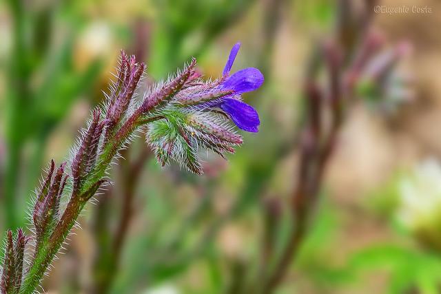 Piccoli fiori nascosti (2) / Small hidden flowers (2)