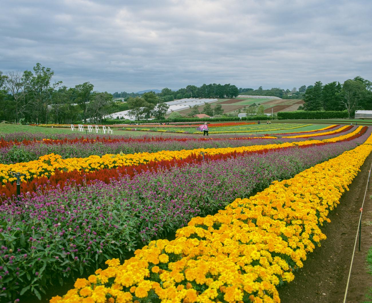 Tesselaar farm