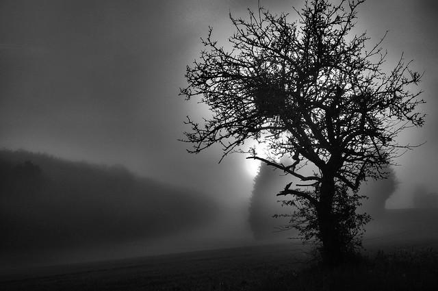 Foggy morning9