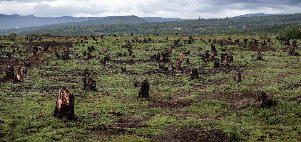 火耕後的毀林慘狀。 來源:Dudarev Mikhail/Shutterstock.com 圖片由IPBES提供。