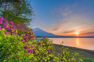 Azalea and Mt. Fuji