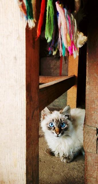 Blue eyes heartbreaker