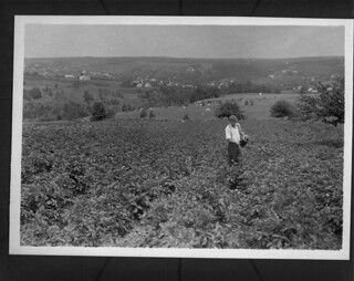 A man spraying potatoes, Bear River Valley, Nova Scotia / Homme aspergeant des pommes de terre, Bear River Valley, Nouvelle-Écosse