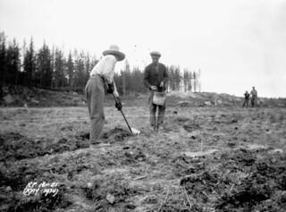 Planting potatoes, as part of Relief Project No. 18, Vermilion Bay, Ontario / Planteurs de pommes de terre dans le cadre du projet de secours no 18, Vermilion Bay, Ontario