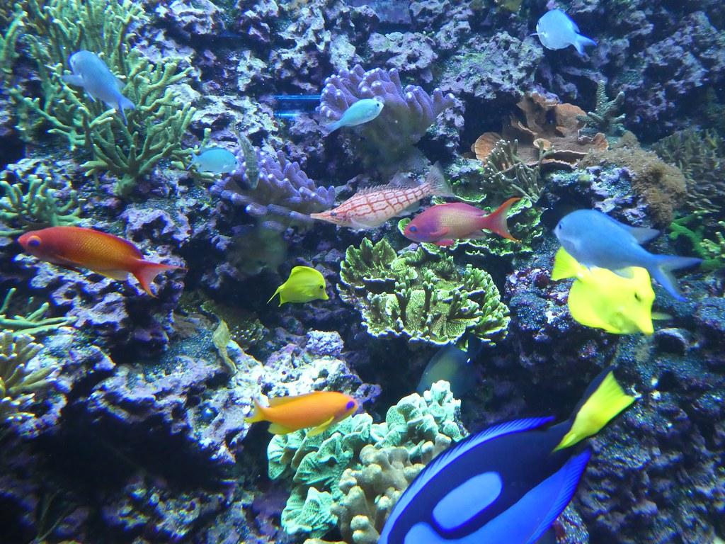 SeaLife Aquarium, Brighton