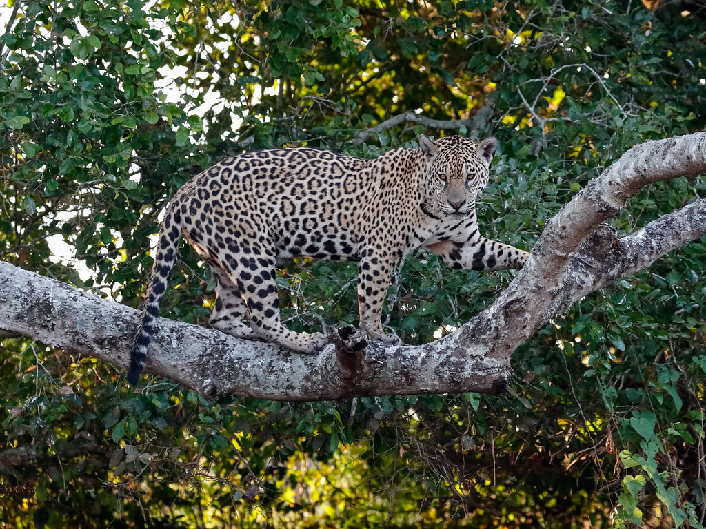 Pantanal_3072