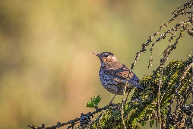Wildlife Bayr. Wald 2019_9