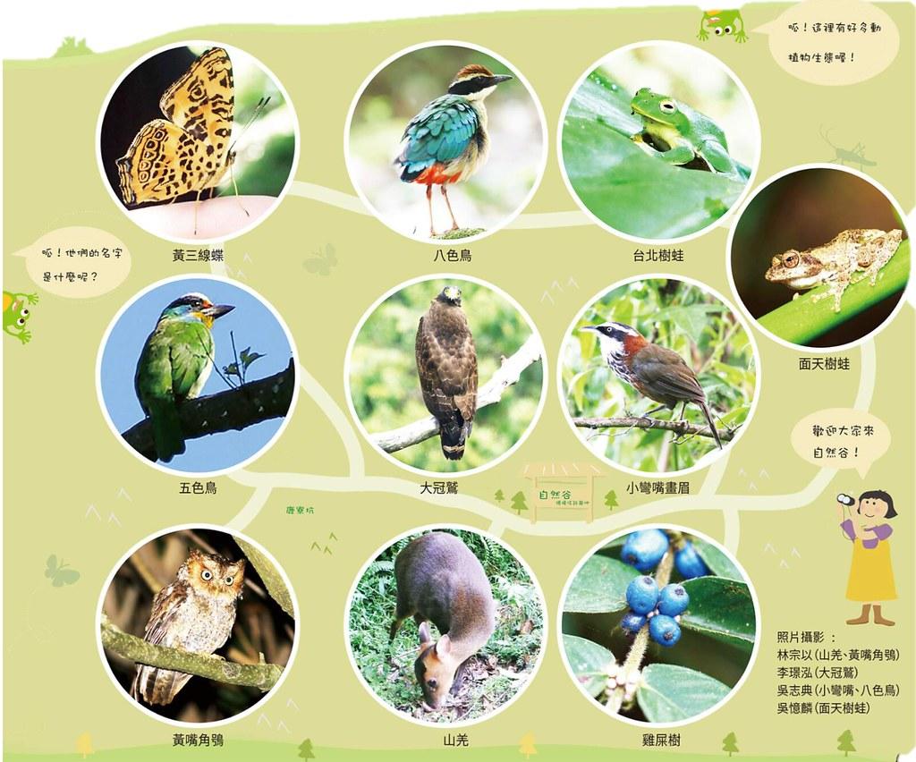 新竹「自然谷」是台灣環境信託首例,棲地已紀錄到692個物種。圖片來源:自然谷年度報告。