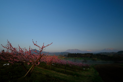 長野市 長野県 日本 nagano iizuna 飯綱町 丹霞郷 tankakyo flower peach peachflower pink pinkflower morning sky mountain japan jp fujifilm xpro2 velvia landscape sunrise spring nature