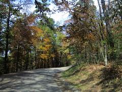 3 Fall Foliage