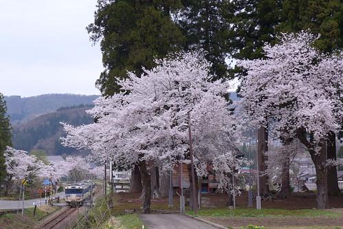桜は4月中下旬頃。入広瀬駅から守門神社にかけての沿線には桜の木が多い