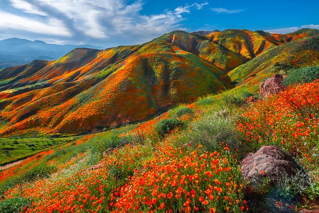 California Poppy Lake Elsinore Walker Canyon Wildflowers Superbloom! God Spilled Buckets of Paint Nikon D850 California Spring Wild Flower Super Bloom Elliot McGucken Fine Art Landscape & Nature Photography! California Poppy Apocolypse 2019!