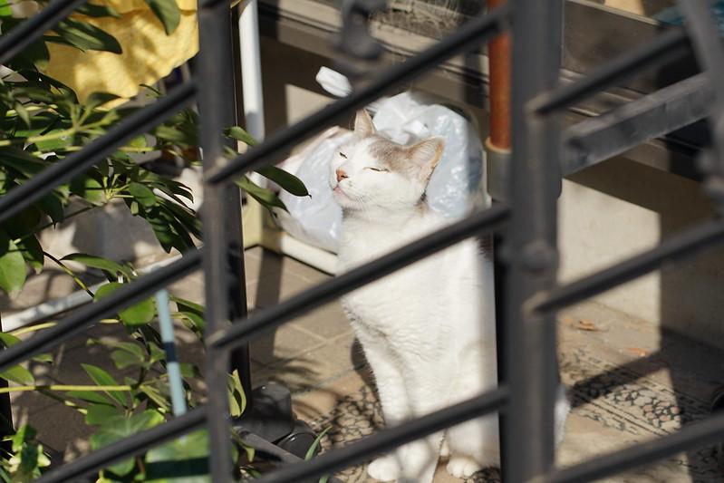 80 雑司ヶ谷路地の猫