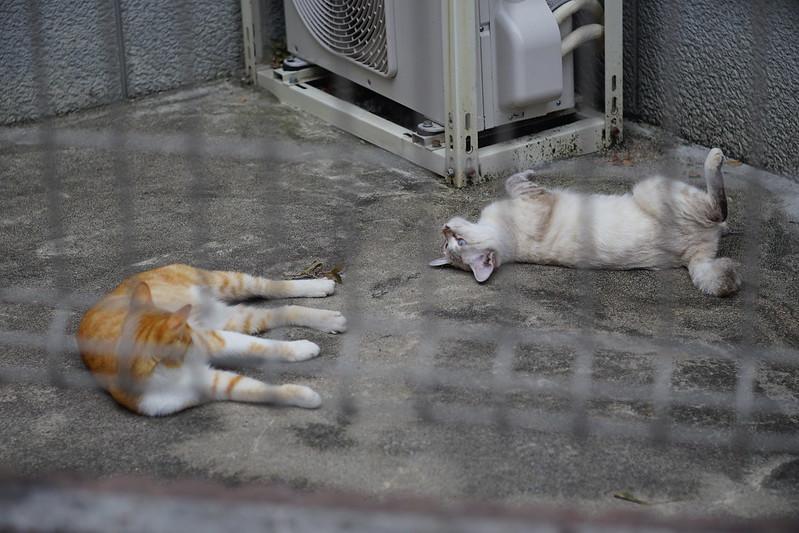 56 南池袋路地の猫