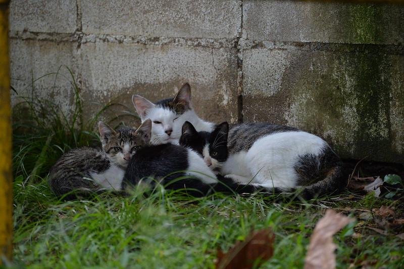 52 池袋本町一丁目児童遊園の猫